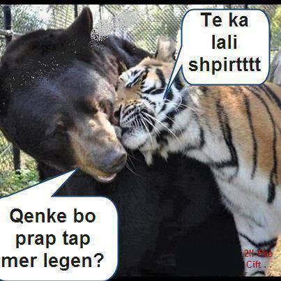 Humore montazhi dhe foto tjera humoristike - Faqe 3 Attachment